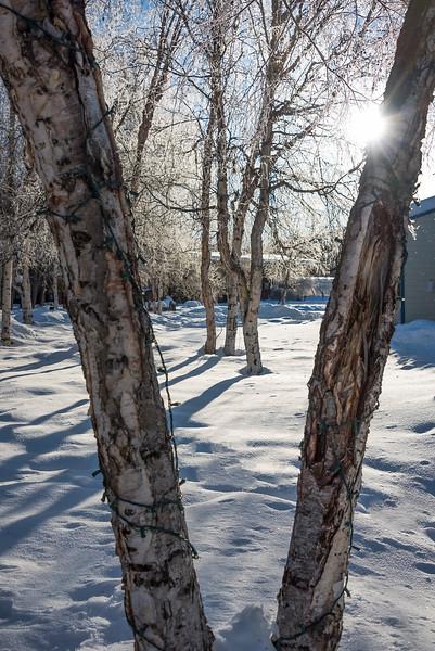 A Framed Sunburst On A Cold Morning -Chena Hot Springs Resort, Fairbanks, Alaska