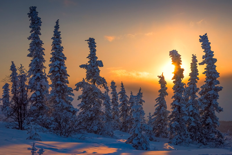 Sunset Glow Silhouettes -Ester Dome, Fairbanks, Alaska