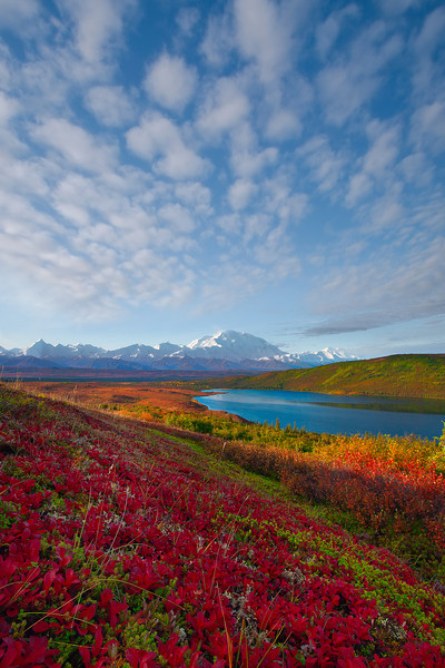 Heading Down To The River Of Color - Denali National Park, Alaska Denali National Park, Alaska