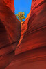 Perched Above Watching It All - - Escalante Wilderness/Grand Staircase - Utah St