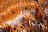 Ice White Castles Of Hoodoos In Bryce - Bryce Canyon National Park, Utah