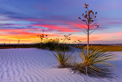 The Iconic Yucca Plants Of White Sands - White Sands National Monument, New Mexico