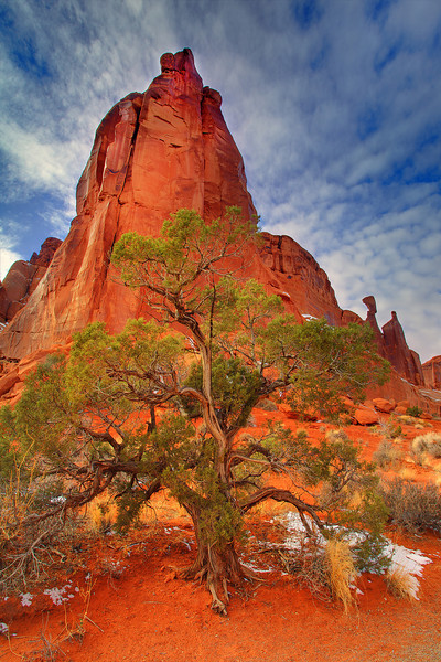 Juniper Dreams - Park Avenue, Arches National Park, Utah