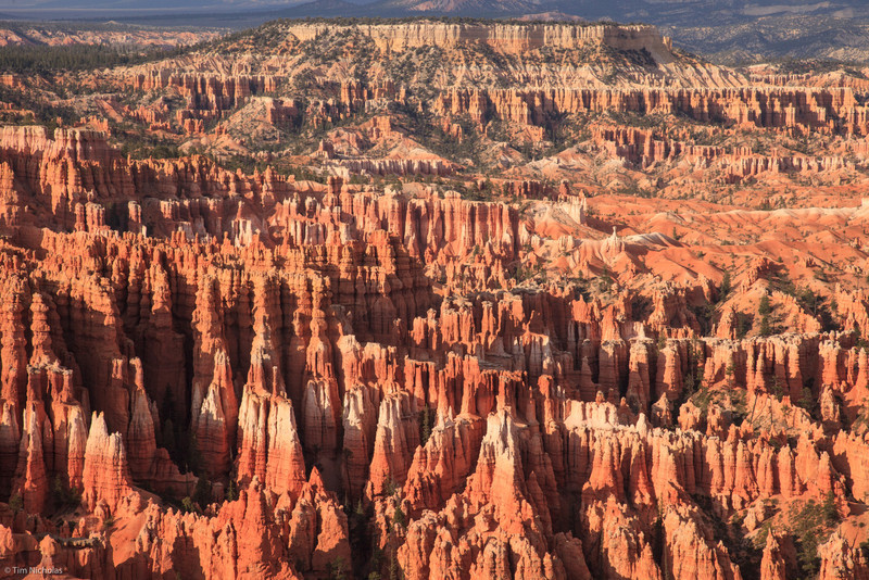 Bryce: red and white hoodoos