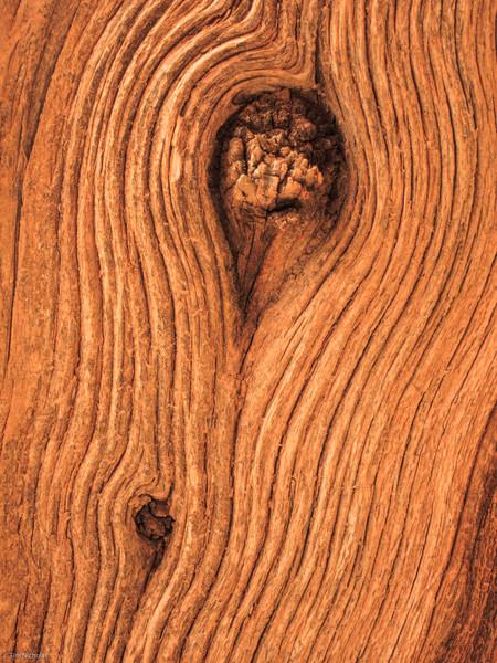 Bryce: tree trunk