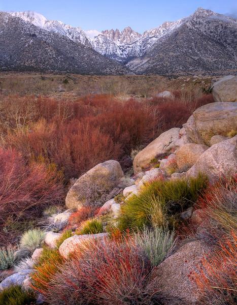 Fall Colors At The Base Of The Sierra Nevada - Alabama Hills, California