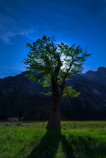 The Tree Silhouette Under The Full Moon - Yosemite National Park, Sierra Nevadas, California