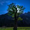 The Tree Silhouette Under The Full Moon - Yosemite National Park, Sierra Nevadas, California