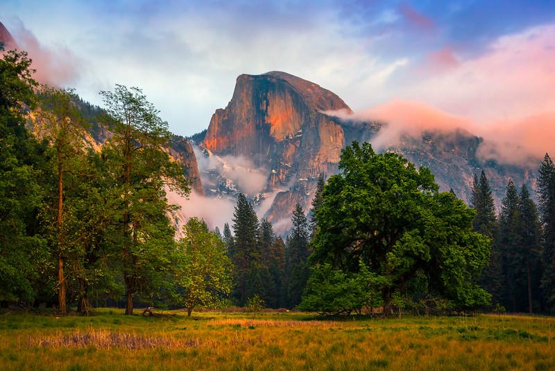 Half Dome And The Elm Tree - Yosemite National Park, Sierra Nevadas, California