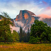 Half Dome And The Elm Tree - Yosemite National Park, Sierra Nevadas, California