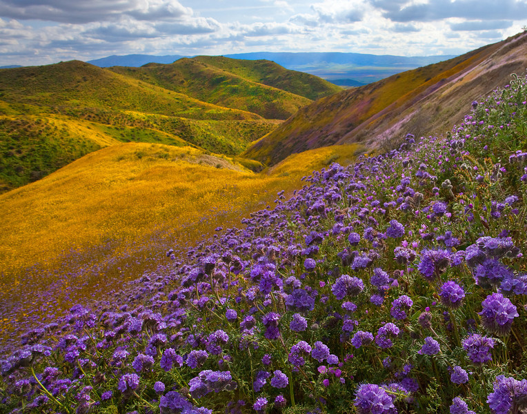 Looking Down Into Valleys Of Color - Carrizo Plain National Monument, California