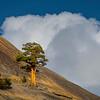 The Solo Tree Hangin On The Cliffside - Yosemite National Park, Sierra Nevadas, California
