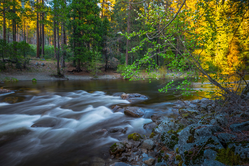 Dogwoods And Late Color On Merced River - Yosemite National Park, Sierra Nevadas, California