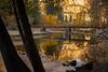 Reflections Of Gold Under Swinging Bridge - Lower Yosemite Valley, Yosemite National Park, California