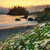 Spring Is Alive On The Coast - Trinidad Beach, Northern California