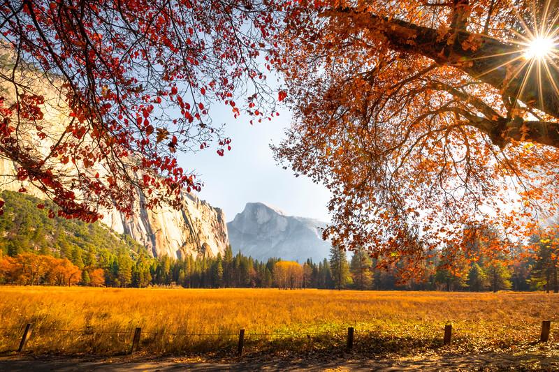 Sunburst Through Autumn Foliage - Lower Yosemite Valley, Yosemite National Park, CA
