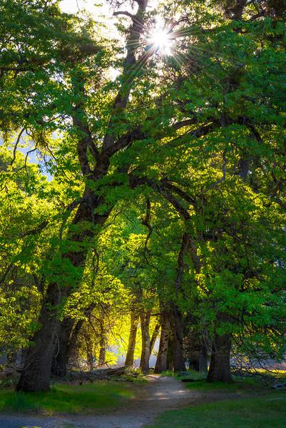The Walking Trails Of Yosemite - Yosemite National Park, Sierra Nevadas, California