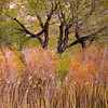 Fall In The Owens Valley - Owens River, BIshop, California