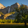 Upper Yosemite Falls From Cools Meadow - Yosemite National Park, Sierra Nevadas, California