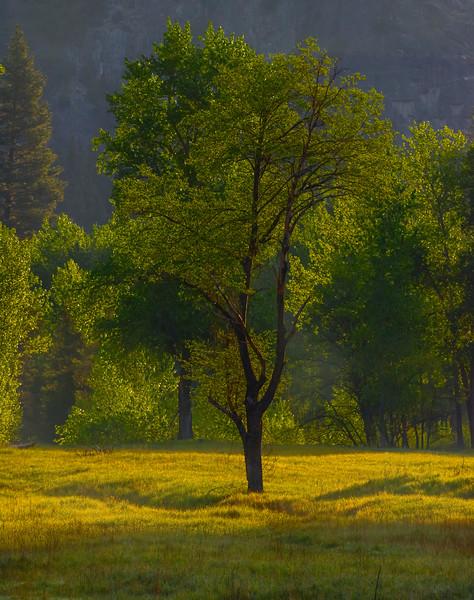 First Light Streak Across Grass - Yosemite National Park, Sierra Nevadas, California