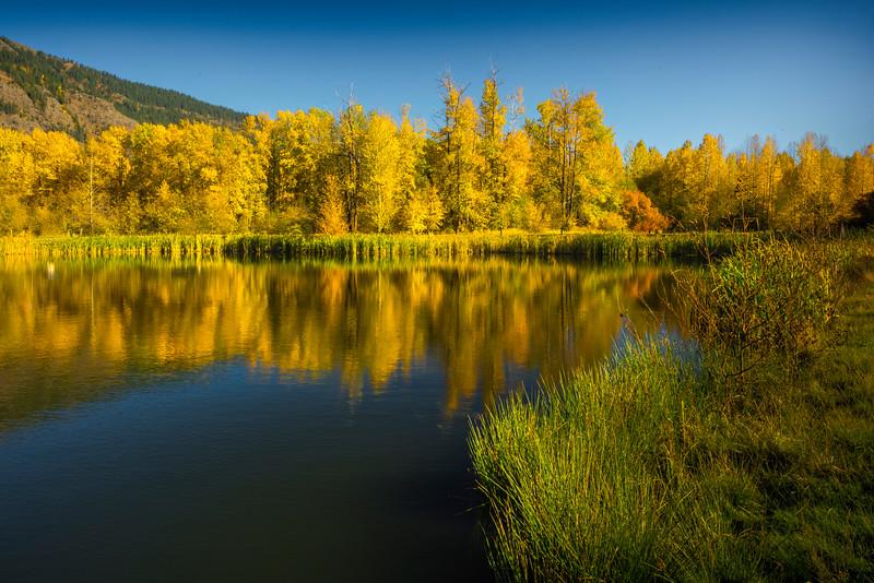 Yellow Pond Reflections In Autumn Glory - Easton Ponds, WA