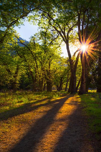 Early Morning Sun Shining On Trails - Yosemite National Park, Sierra Nevadas, California