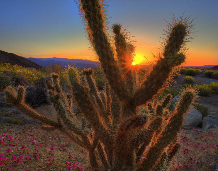 Burst Of Light In Anza - Anza-Borrego Desert State Park, California