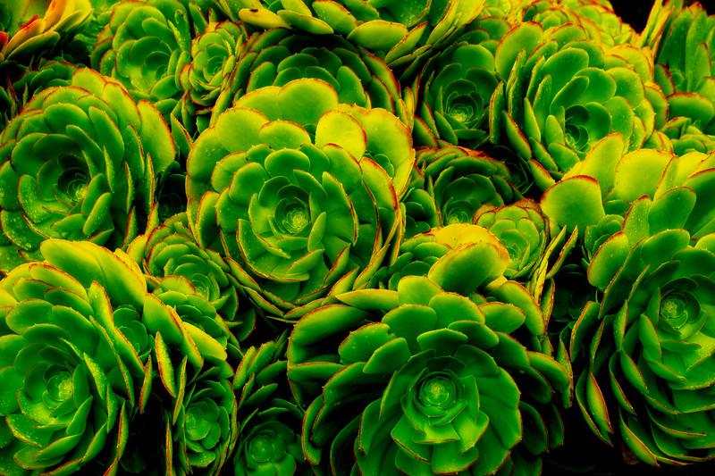 A Dash Of Rain - Botanical Gardens, Mendocino, California