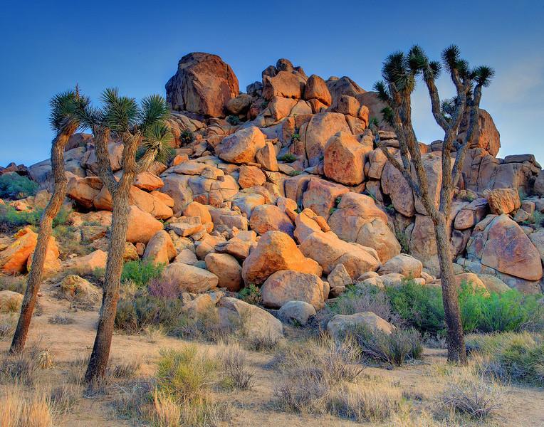 Jumbo Rocks - Joshua Tree National Park, California