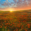 Spring Dreams - Antelope Valley California Poppy Reserve SNR, California
