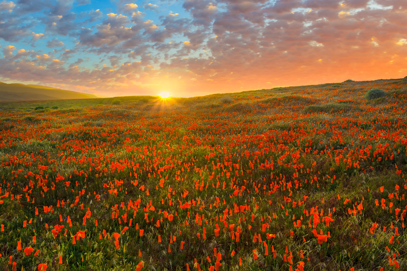 Spring Dreams - Antelope Valley California Poppy Reserve SNR, California