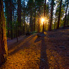Sunstar Through The Mariposa Grove - Yosemite National Park, Sierra Nevadas, California