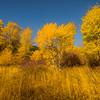Autumn Golden Meadows - Highway 97, Near Cle Elum