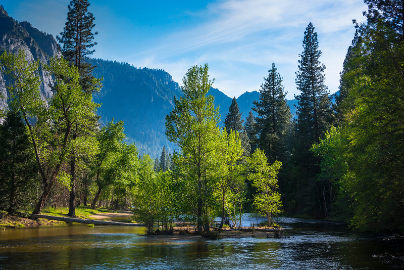 Island Of Green In The Merced River - Yosemite National Park, Sierra Nevadas, California