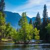 Island Of Green In The Merced River - Yosemite National Park, Sierra Nevadas, California