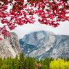 Signs Of Spring In Yosemite - Yosemite National Park, California