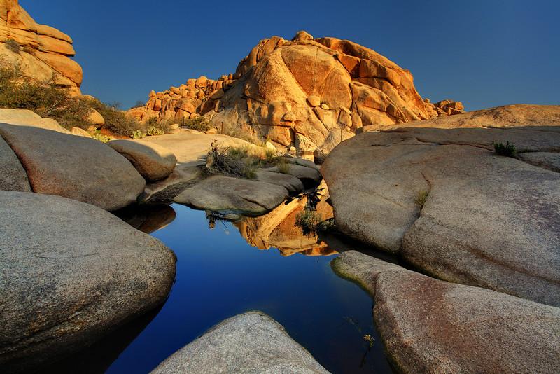 Warm Reflections Of Joshua - Joshua Tree National Park, California