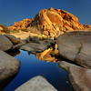 Warm Reflections Of Joshua - Joshua Tree National Park, California