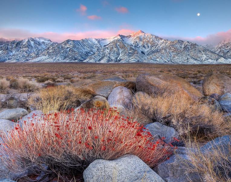 A Touch Of Red - Manzanar, Eastern Sierras, California