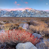A Touch Of Red - Manzanar, Eastern Sierras, California