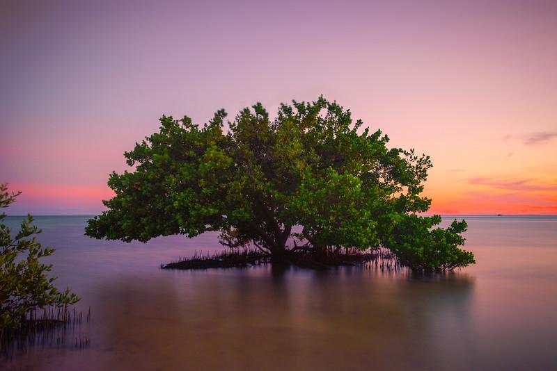 Sunset Reds Over Florida Mangrove -  Key Largo, Florida Keys, Florida