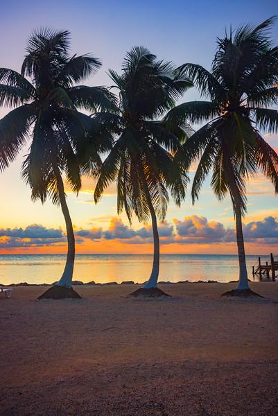 Three Of A Kind At Sunrise - Marathon, Florida Keys, Florida