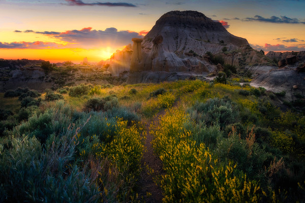 Sweet Clover Pathway To Sunset - Makoshika State Park, Glendive, Eastern Montana