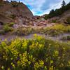 Sweet Clover Deep In The Valley Floor - Makoshika State Park, Glendive, Eastern Montana