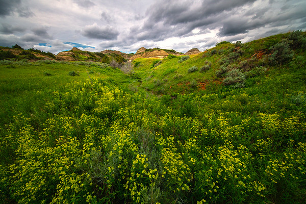 Sweet Clover Leading Into The Hills - Theodore Roosevelt National Park, North Dakota