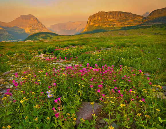Paths Of Color And Wildflowers - Logan's Pass, Glacier National Park, Montana