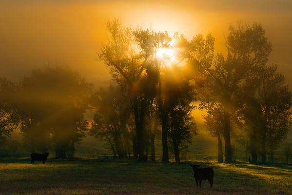 The Stunning Magic Hour - Greenough, Montana