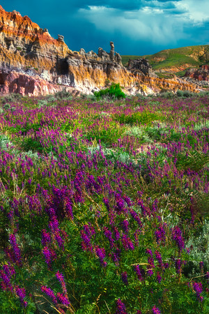 Wildflower Heaven Among The Hoodoos - Casper, Wyoming