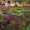 Wildflower Heaven Among The Hoodoos - Casper, Wyoming