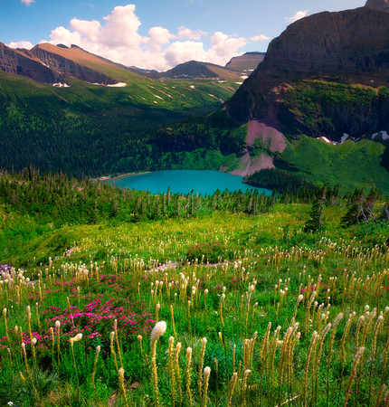 Nothing But Beargrass All The Way Down - Grinnell Glacier Trail, Many Glacier, Glacier National Park, Montana